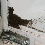 Как правильно бороться с муравьями?