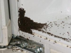 Как правильно бороться с муравьями