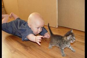 Котенок как ребенок