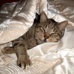 Кошка в квартире: стоит ли заводить желанного питомца?