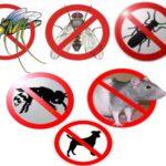 Профессиональная дезинфекция как спасение от нашествия насекомых и грызунов.