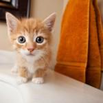 Милый котенок, как же тебя назвать?