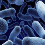 Польза бактерий для септиков и выгребных ям.