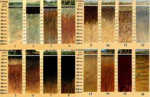 закон соответствия вида почвы